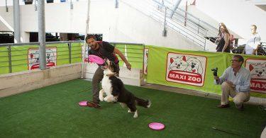 maxi zoo evento agility cani 2