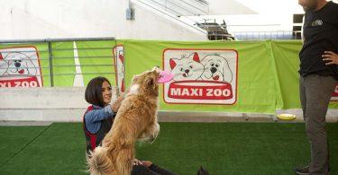 maxi zoo evento agility cani 3