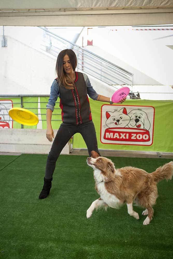 maxi zoo evento agility cani 4