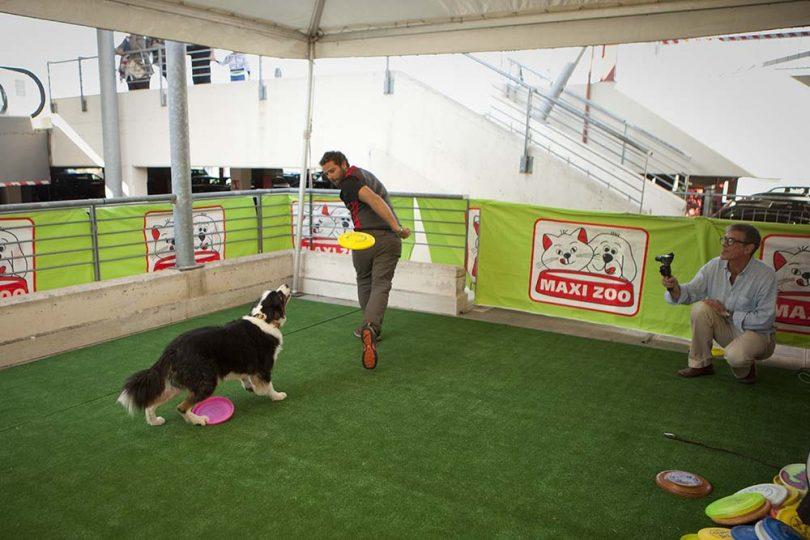 maxi zoo evento agility cani