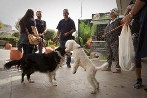 maxi zoo evento cani