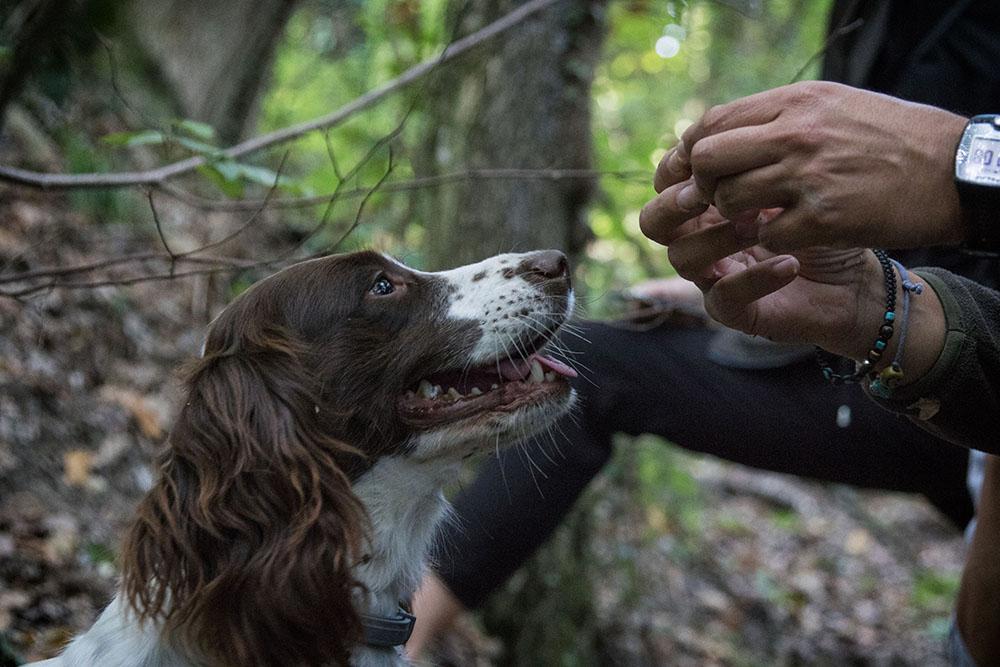 organizzare un team building cani da tartufo