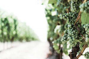 viaggio incentive di lusso degustazioni uva vino cucina enoteca pinchiorri